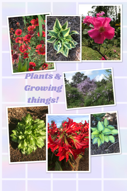 Plants & Growing THings