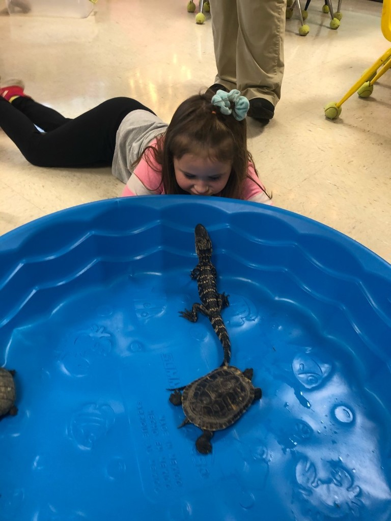 Reptiles in Kindergarten