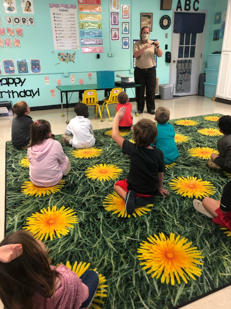 Learning about insects in Kindergarten
