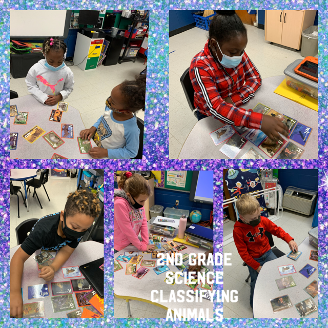 2nd Grade Classifying Animals