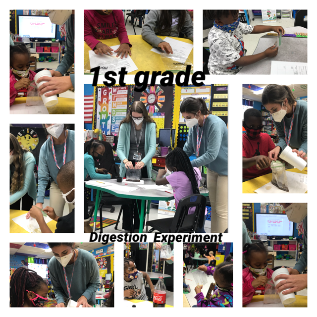 Students in 1st grade are learning about the digestive system.
