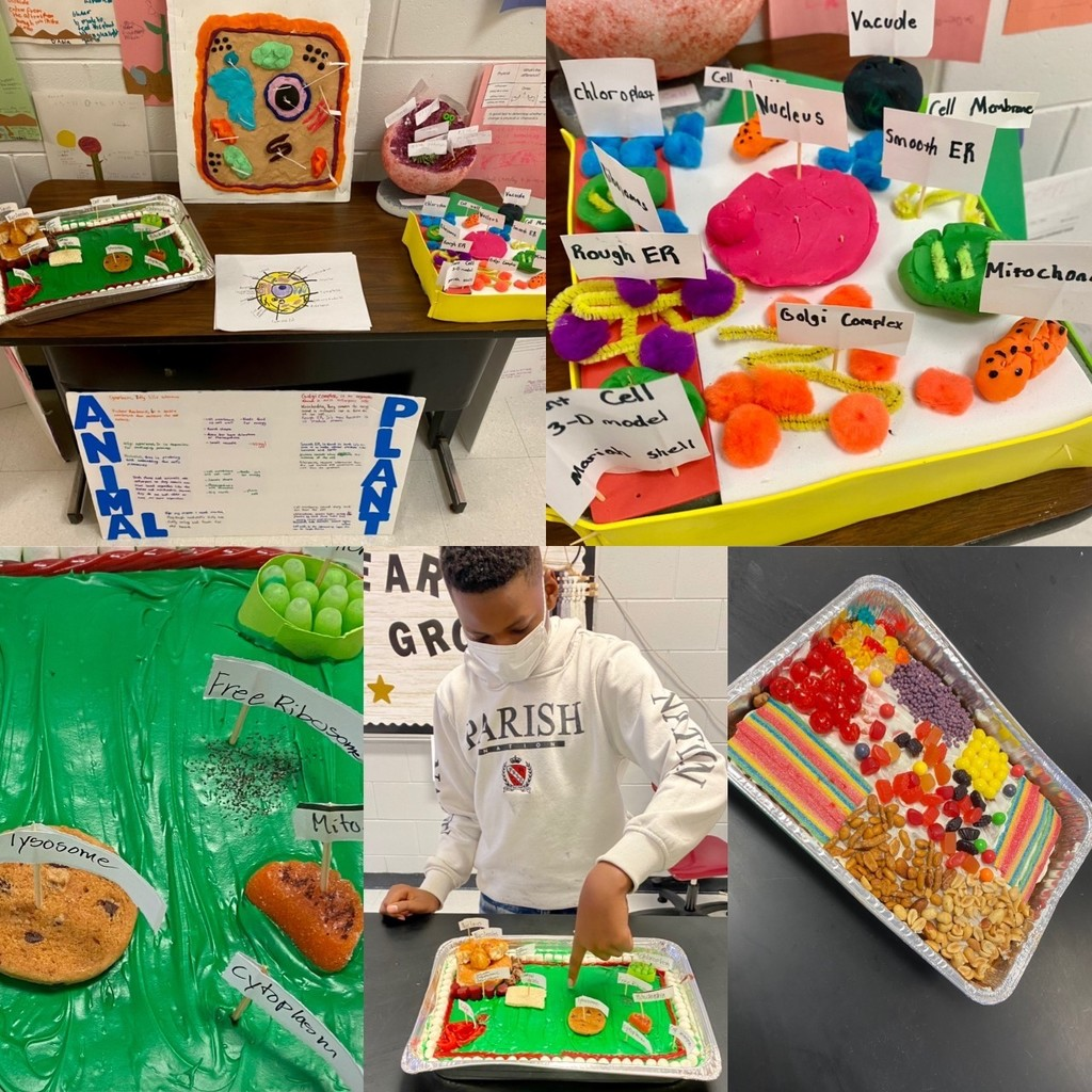 Edible Cell Presentations, Google Slides, Scrapbooks, 3D models, and posters!!